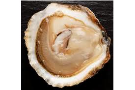 huître Belon