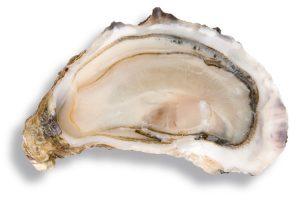 huître fine de claire