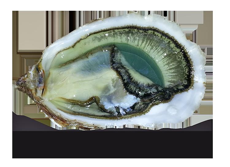 huîtres vertes